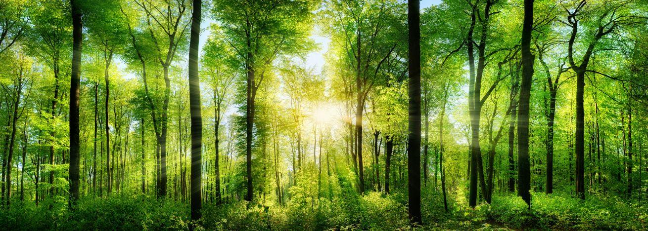 あなたは、自分自身が誰かにとって、価値があることを証明するために、地球上にいるのではない。-byエイブラハムの教え